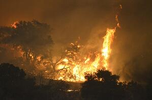 Inforum - California Insurance Industry Wildfire - SEP